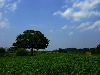 IMG_0087空と樹木.jpg